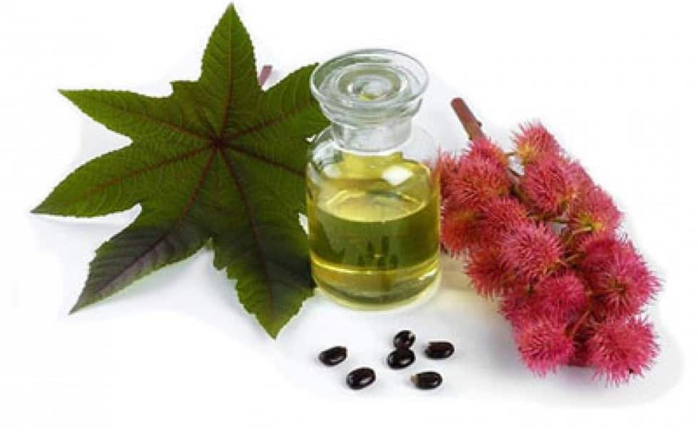 coloration-organique-huile-de-ricin